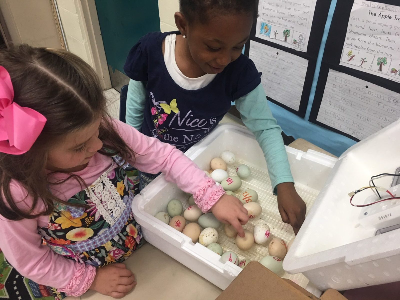 Two girls gently touch eggs in an incubator.