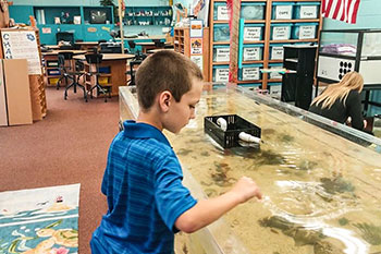 Student standing near a tank of sea creatures